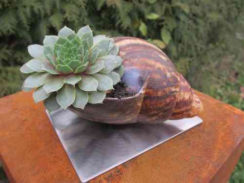 Gartendeko pflanzen hingucker f r den innen oder for Eisenkugel deko